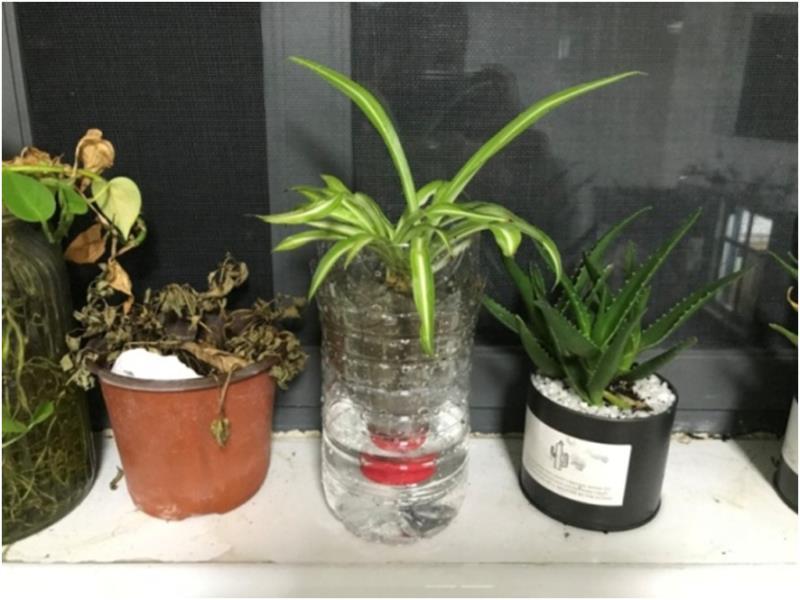 塑料瓶自灌溉花盆